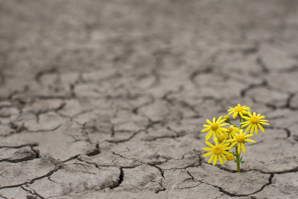 flower growing in dry cracked ground